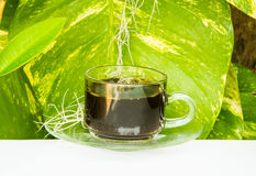 Coffee cup on garden background Royalty Free Stock Photo