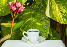Coffee cup on garden background Stock Photo