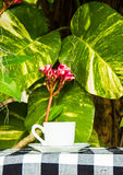 Coffee cup on the  garden background Royalty Free Stock Image