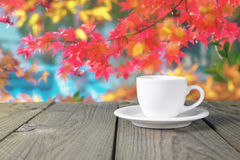 Coffee cup nature Stock Photos