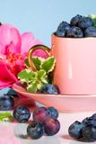 Coffee cup stuffed with blueberries. Pink coffee cup over aqua paper background full of blueberries and mint leaves royalty free stock images