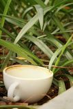 Coffee cup is then used on a green grass background. Stock Images