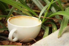 Coffee cup is then used on a green grass background. Royalty Free Stock Images