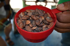 Cacao bean Stock Photography