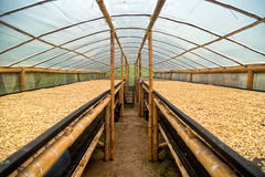 Coffee drying greenhouse. In Salento, Colombia Royalty Free Stock Photo
