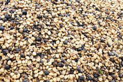 Coffee excellent quality from the best plantations Stock Photography