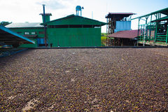 Coffee farm Stock Photo