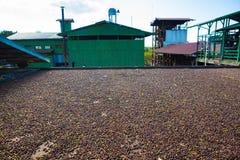 Coffee farm Stock Photo