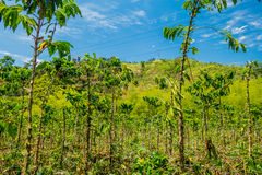 Coffee farm in Manizales, Colombia stock images