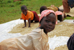Coffee farmer. Children in Uganda help farmers dry coffee beans after picking them Royalty Free Stock Photos
