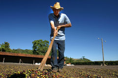 Coffee farmer Royalty Free Stock Images