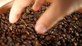 Coffee farmer and roasted coffee beans. Group stock video