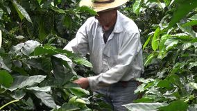 Coffee Farmer, Worker, Plantation, Nature stock video footage