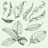 Coffee and fern leafs. Set of floral design elements - coffee and fern leafs Royalty Free Stock Images