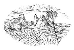 Coffee field, cocoa plantation. Vintage landscape, old looking scratchboard or tattoo style for menu and signage in the. Bar. engraved hand drawn sketch for Stock Image