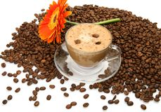 Coffee and flower Stock Image