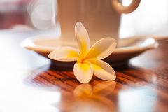 Coffee and flower. Coffee in the early morning royalty free stock images