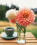 Coffee and flowers. Flowers, chrysanthemum, nature, coffee, table, garden, glass, bouquet, bunch of flowers Stock Image