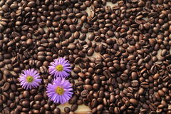 Coffee with flowers. Three flowers on the coffee bean Stock Photos