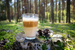Coffee in the forest Royalty Free Stock Photo