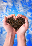 Coffee fragrant heart. Strong hands hold grains of coffee in the form of heart over the dark blue cloudy sky Royalty Free Stock Images