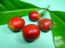 Coffee fruits Royalty Free Stock Photo