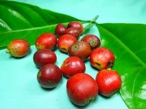 Coffee fruits Royalty Free Stock Photos