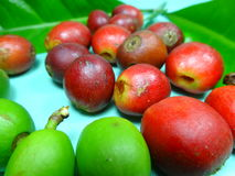 Coffee fruits Royalty Free Stock Image