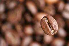 Coffee grain Royalty Free Stock Photography