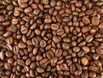 Coffee. Grain cooked for a good coffee Royalty Free Stock Photos