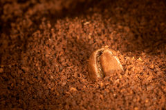 Coffee grain on the ground coffee. Brown color stock images