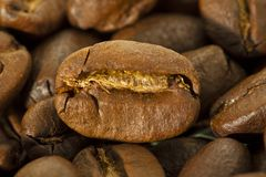 Coffee grain Stock Image