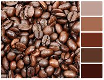 Coffee grain texture with palette color swatches Stock Photos