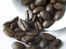 Coffee grains. In the coffee cup Stock Photography