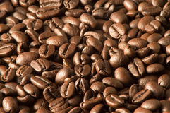 Free Coffee Grains Royalty Free Stock Images - 877289