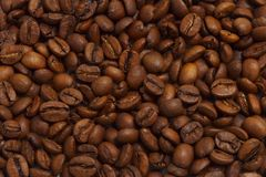 Coffee Grains Background. Lots of dark coffee grains for abstract background Royalty Free Stock Image