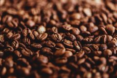 Coffee grains. Background of roasted coffee beans brown. layout. Flat lay royalty free stock images
