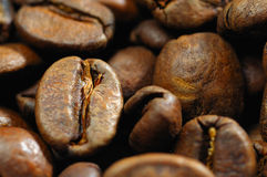 Coffee grains close up Stock Images