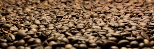Coffee in grains close up Royalty Free Stock Image