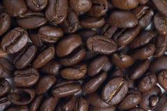 Coffee. Grains - close up Stock Photos