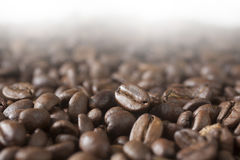 Coffee grains. Closeup photo of coffee grains with copy space above them Royalty Free Stock Image