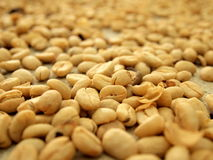 Coffee grains drying on the sun Royalty Free Stock Image