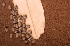 Coffee grains on leaf Stock Photography