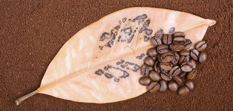 Coffee grains on leaf Stock Photo