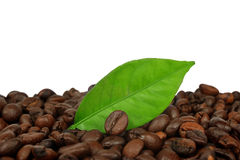 Coffee grains and leaf Royalty Free Stock Photography