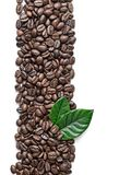 Coffee grains and leaves Royalty Free Stock Photo