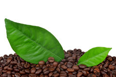 Coffee grains and leaves Royalty Free Stock Photos