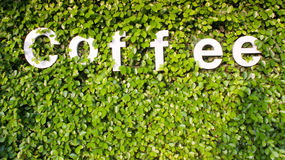 Coffee in green Stock Photography