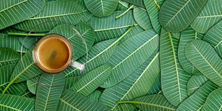 Coffee on of green leaves. Flat lay stock photography