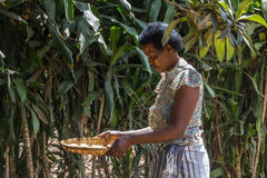 Coffee growing in Africa Stock Photography